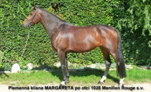 horse_margareta-_3big.jpg